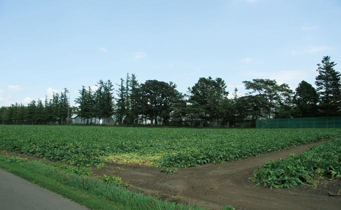 大野ファームでは牧草やデントコーンの他、大豆やビート、小麦などの畑作も行われている。