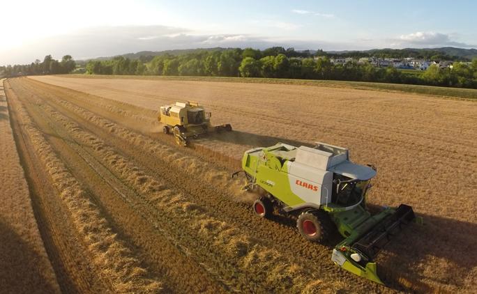 小麦の収穫は、朝露の乾き始める午前10時頃からスタートする。コンバインで収穫された小麦は畑に併設されている乾燥工場にダンプで運ばれる。