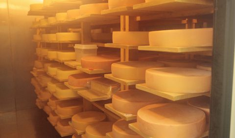 酪農王国十勝。チーズがおいしいのには理由があった!