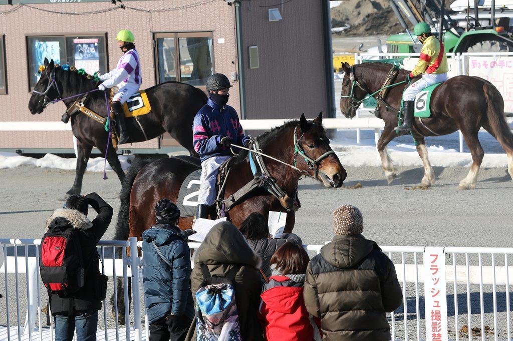 パドックの見方が分かると競馬がいっそう楽しくなりますよ!
