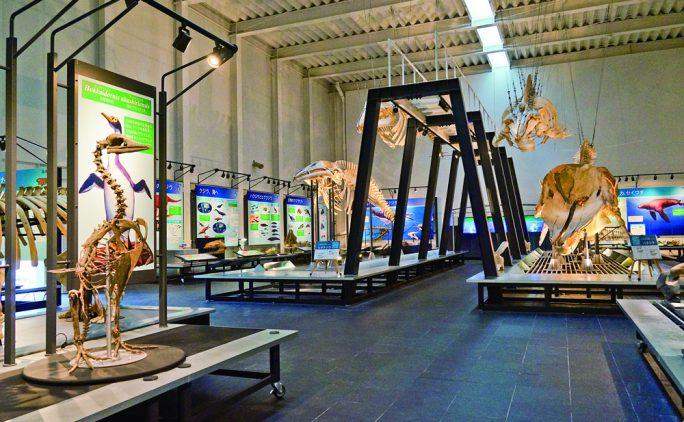 子どもと行ける学びスポット① 足寄動物化石博物館